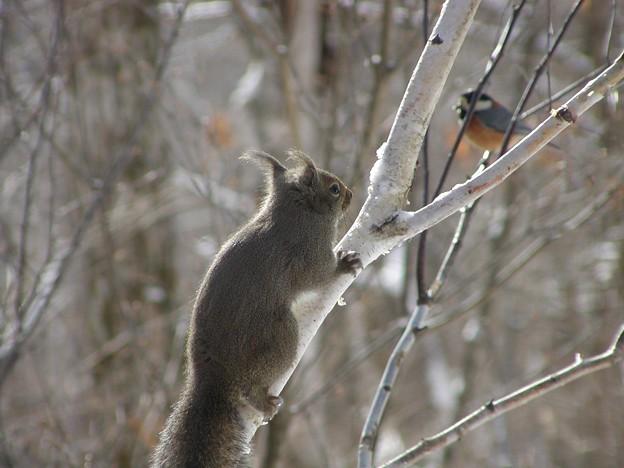 Photos: りすと野鳥