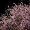 ネット de 夜桜