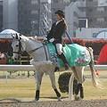写真: 川崎競馬の誘導馬04月開催 桜Verその1-120409-05-large