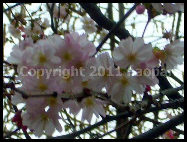 写真: P2650979