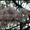 Photos: P2650979