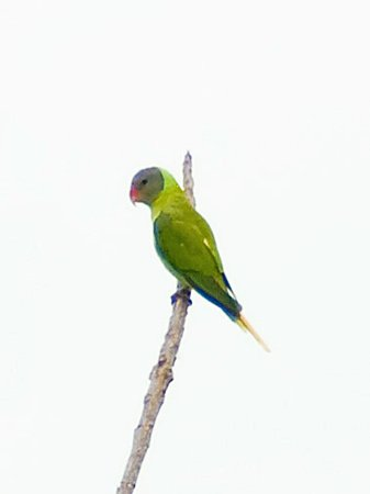 謎の野鳥 IMGP130963(C)