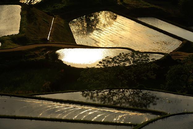 写真: 朝陽に染まる棚田。。。