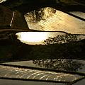 朝陽に染まる棚田。。。