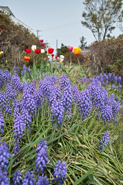 Photos: flowers05022011dp1-03