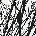 写真: 謎!正体不明の鳥
