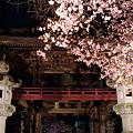 東円寺の夜桜