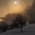 深霧の夜明け~木2