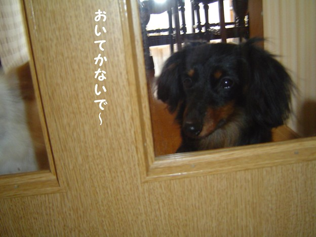Photos: チョコ1 009