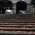 写真: 尾山神社神門  落ち葉