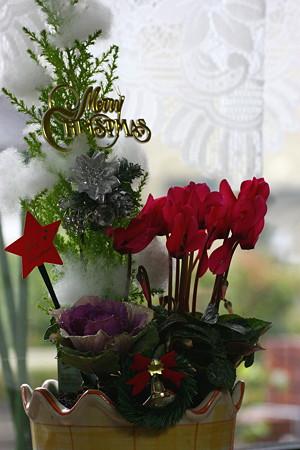 クリスマスの寄せ植え(2)