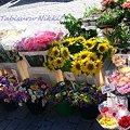 ヘルシンキの夏のお花たち