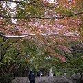 写真: かまど神社紅葉
