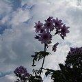 写真: 何の花?