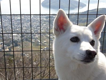 2010年正月帰省 野呂山からの眺め ワンコ01