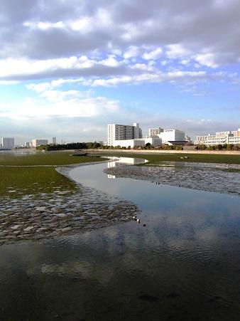 20100123 谷津干潟 水鏡ロード03