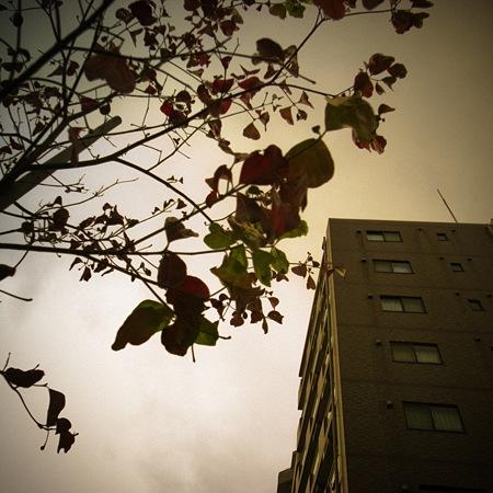 2009-11-16の空