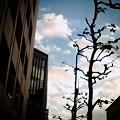 Photos: 秋過ぎる