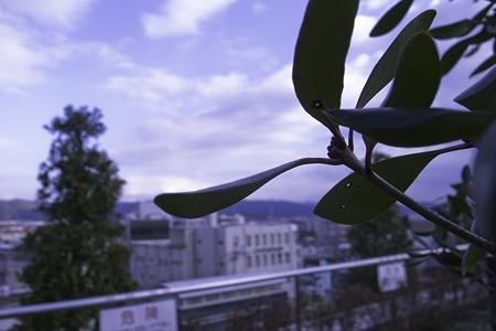 2010-01-17の空1