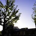 Photos: 2010-11-03の空