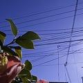 Photos: 2011-04-04の空