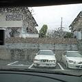 写真: 20100321_kousa2