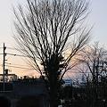 写真: 20110215_170806