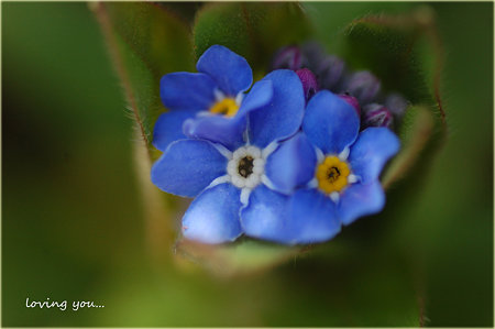 花束のように・・・。