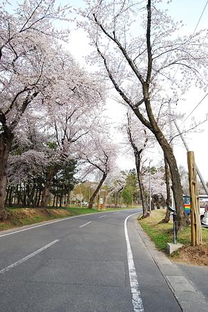 今年初めてのキャンプに行ってきました。桜が満開でした。