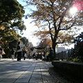 Photos: Shinobazu_Pond