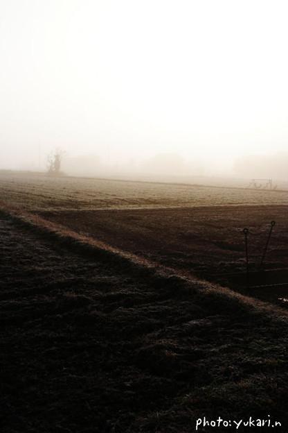 Photos: 霧の朝