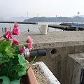 Photos: 110122Gプリ広島046