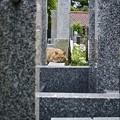 写真: 墓場の茶太郎