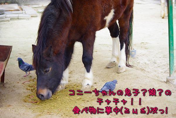 s-myu2009_1129(176)