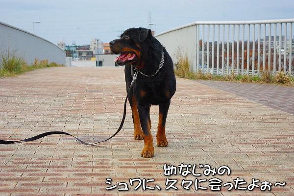 s-myu2009_1213(045)