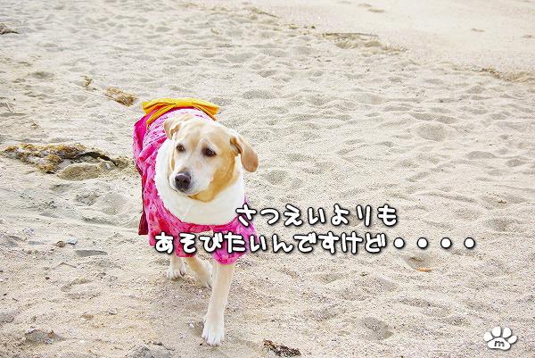s-myu2009_1230_3