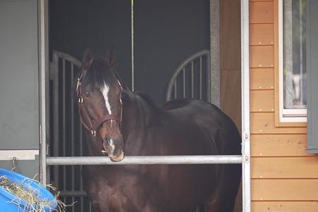 馬房から睥睨するテイオー