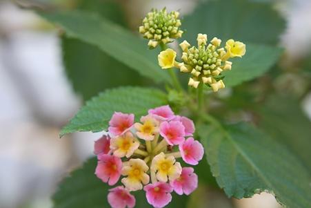 高砂路傍の花 5