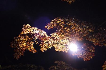 清澄庭園 紅葉ライトアップ