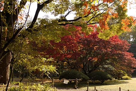 六義園 秋色の重なり