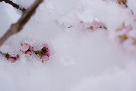 雪に埋もれても