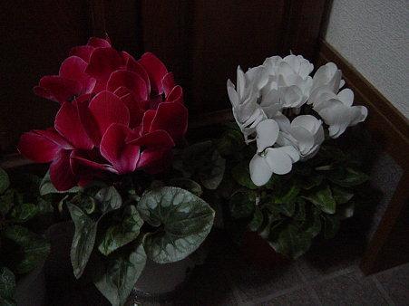 この時期の花