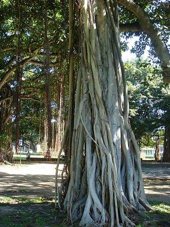 ー1本の樹ー