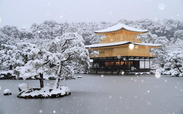 写真: 金閣寺11