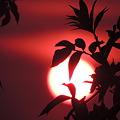 日食後の夕陽