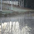 写真: Birches 11-9-09