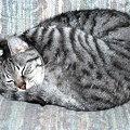 Yoga Cat 9-24-08
