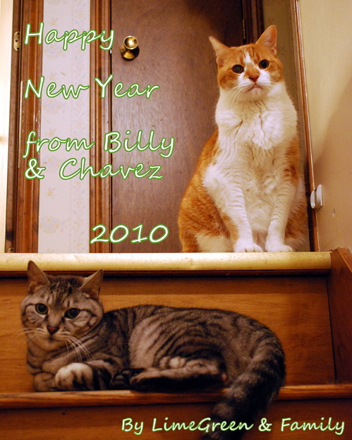 Photos: New Year 2010
