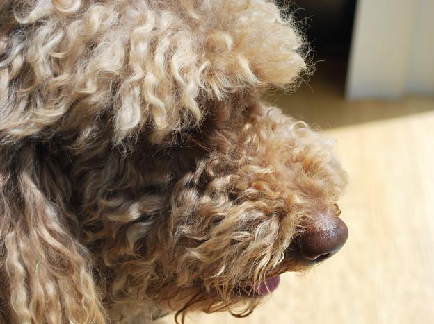 Photos: Profile of Davey 5-30-09