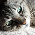 Green Eyes 2-11-10